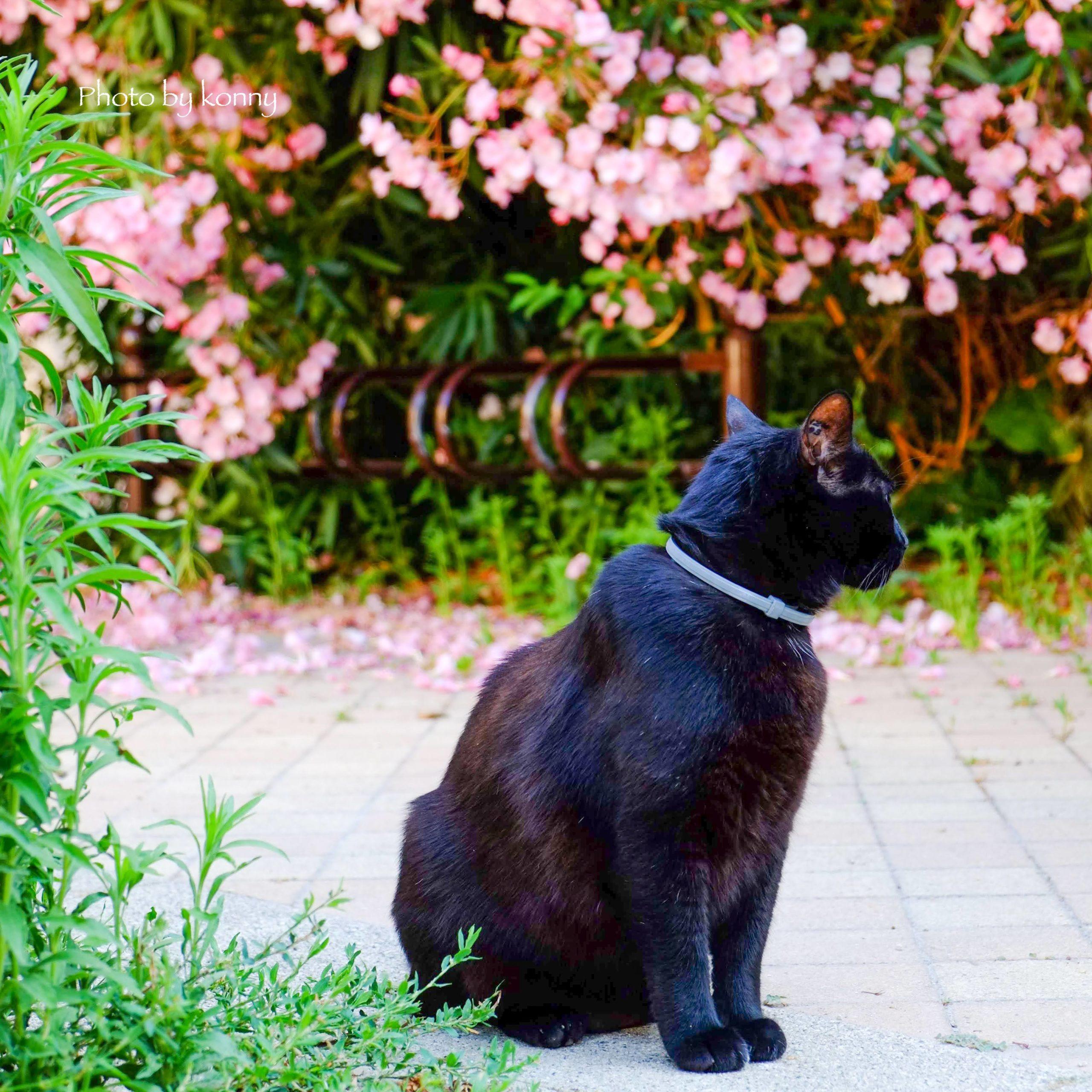 「岩合光昭の世界ネコ歩き」動画 フランス、ブルゴーニュ編を観てみた